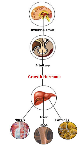 HGH Therapy, HGH Prescriptions for Growth Hormone Injections @ www.RXHGHTherapy.com